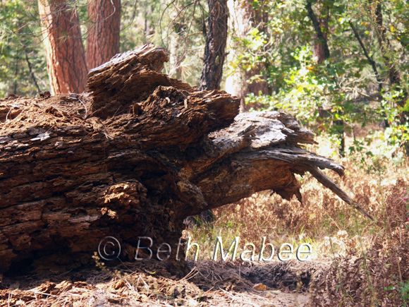 Dragon Stump photo
