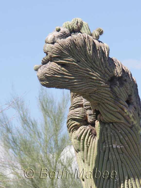 Witchy Cactus
